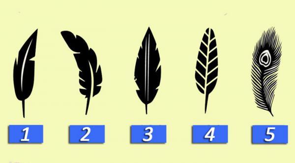 Dime cuál pluma te gusta y te diré un gran secreto de tu personalidad ¡Te sorprenderá!