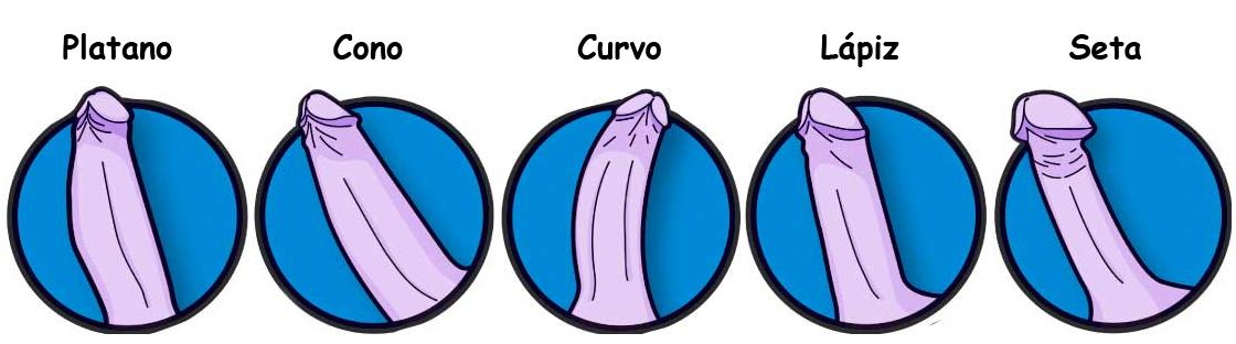Tipos de pene sexuales
