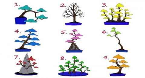Escoge un árbol y conoce a qué trabajo estás predispuesto