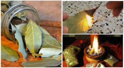 Simplemente quemar una hoja de laurel en su casa. La razón? Usted querrá probar este truco después de leer ESTO!