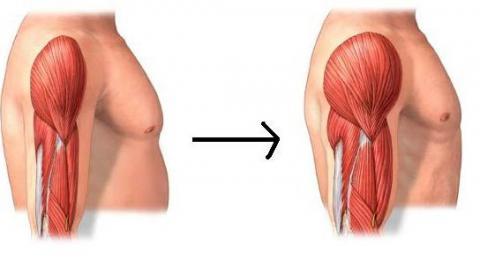 Descubren un método para aumentar la masa muscular con poco esfuerzo