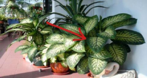 ¡Ésta planta en la casa puede matar a un niño en menos de un minuto y a un adulto en 15 minutos!