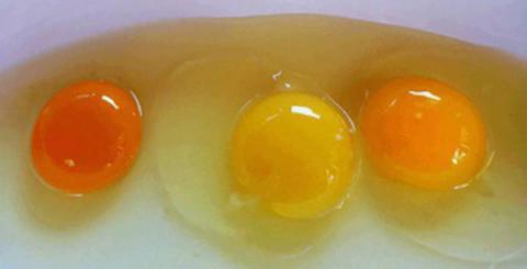 Debes pensar dos veces antes de decidir cuál de estas yemas de huevo te parece más normal