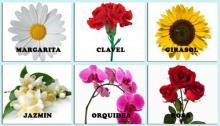 Escoge la flor que más te guste y te diremos qué personalidad posees.