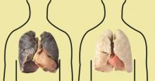 4 productos que purifican los pulmones de un fumador. ¡No dejen de leerlo!