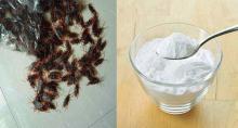 Remedio para eliminar las cucarachas