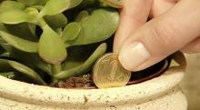 ¡Te explicamos cómo activarla! Esta planta en tu hogar funciona como un imán para la riqueza y la llama a la energía positiva