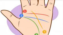 Mirando estas 4 lineas de tu mano puedes predecir tu futuro y tu perfil psicológico