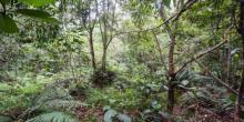 Nuevo desafío: ¿podés encontrar a los doce soldados escondidos en la selva?