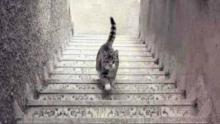 El gato ¿sube o baja las escaleras? Solución - Explicación