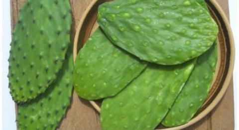Le dicen la planta de la vida, ayuda a curar más de 5 enfermedades peligrosas.