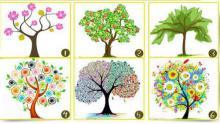 Test: El árbol que escojas habla de cómo eres realmente